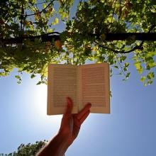 book-in-sun